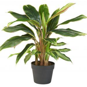 Kunstplant Cordyline breedbladig H65cm - HTT Decorations