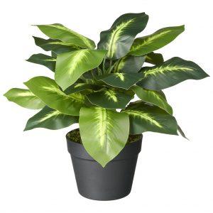 Kunstplant Dieffenbachia H50cm - HTT Decorations