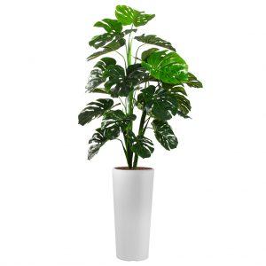 HTT - Kunstplant Monstera in Clou rond wit H185 cm - kunstplantshop.nl