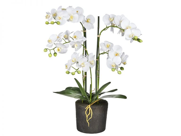 Kunstplant Orchidee / Phalaenopsis XL 5-tak wit H68cm - HTT Decorations