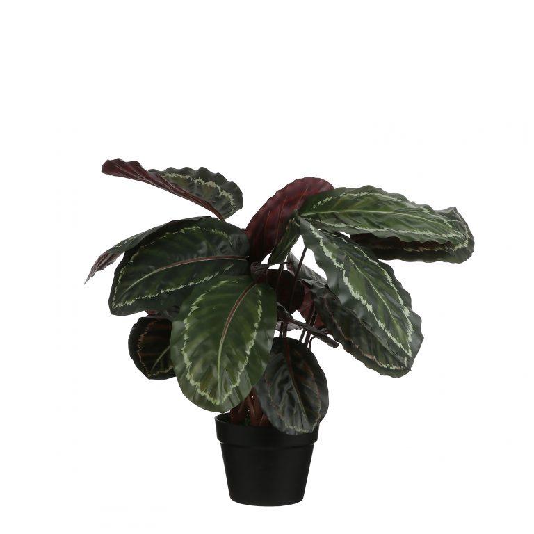 Mica - Kunstplant Calathea roseopicta (h60x40cm) - Kunstplantshop.nl