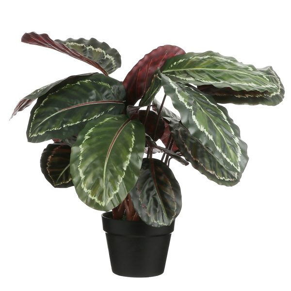 Kunstplant Calathea roseopicta H70cm - HTT Decorations