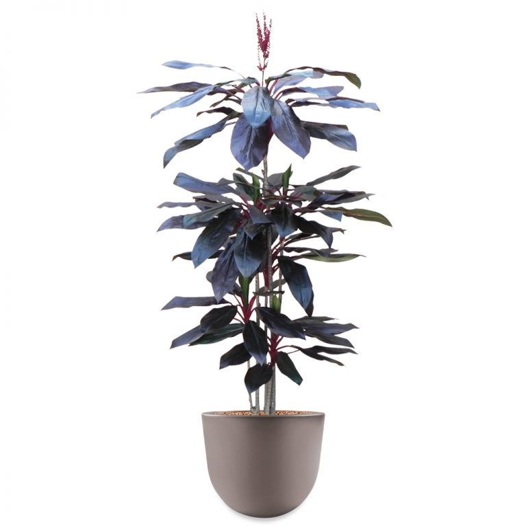 HTT - Kunstplant Cordyline rood in Eggy taupe H195 cm - kunstplantshop.nl