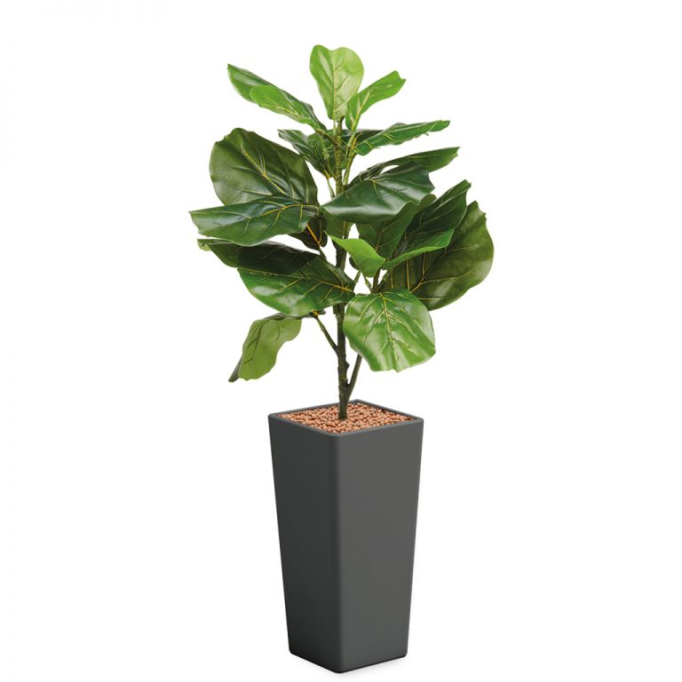 HTT - Kunstplant Ficus Lyrata in Clou vierkant antraciet H115 cm - kunstplantshop.nl