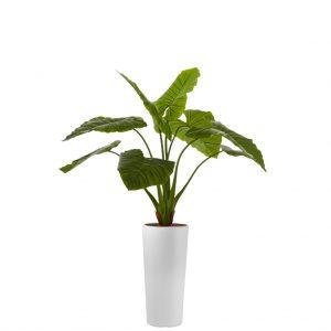 HTT - Kunstplant Philodendron in Clou rond wit H165 cm - kunstplantshop.nl