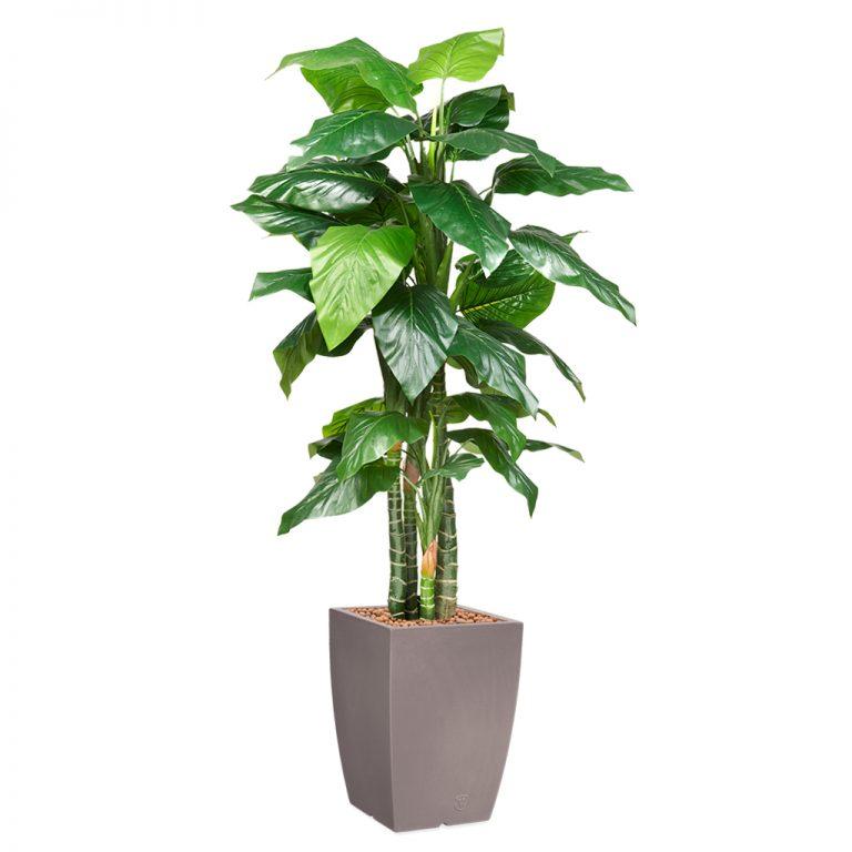HTT - Kunstplant Philodendron in Genesis vierkant taupe H235 cm - kunstplantshop.nl
