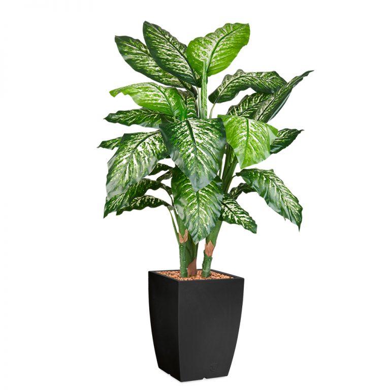 HTT - Kunstplant Dieffenbachia in Genesis vierkant antraciet H150 cm - kunstplantshop.nl