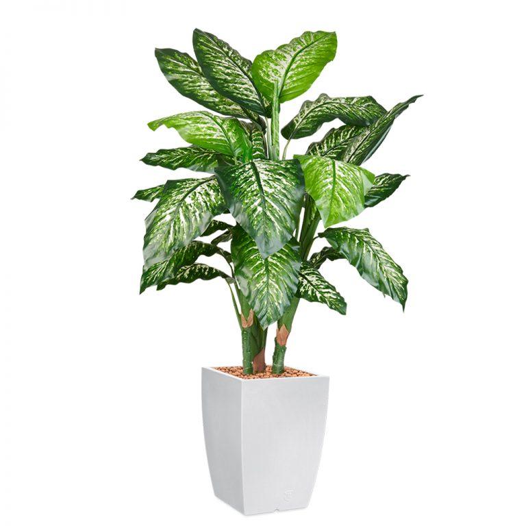 HTT - Kunstplant Dieffenbachia in Genesis vierkant wit H150 cm - kunstplantshop.nl