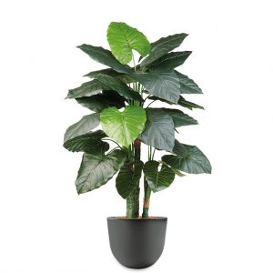 HTT - Kunstplant Philodendron in Eggy antraciet H135 cm - kunstplantshop.nl