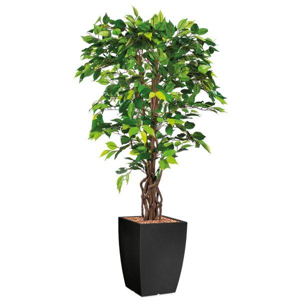 HTT - Kunstplant Ficus in Genesis vierkant antraciet H165 cm - kunstplantshop.nl