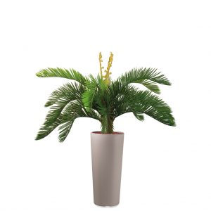 Kunstplant Cycas in Clou rond taupe H105 cm - HTT Decorations