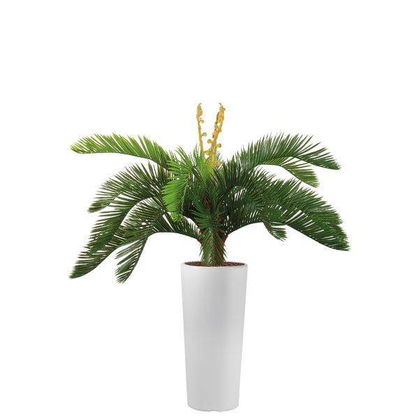 Kunstplant Cycas in Clou rond wit H105 cm - HTT Decorations
