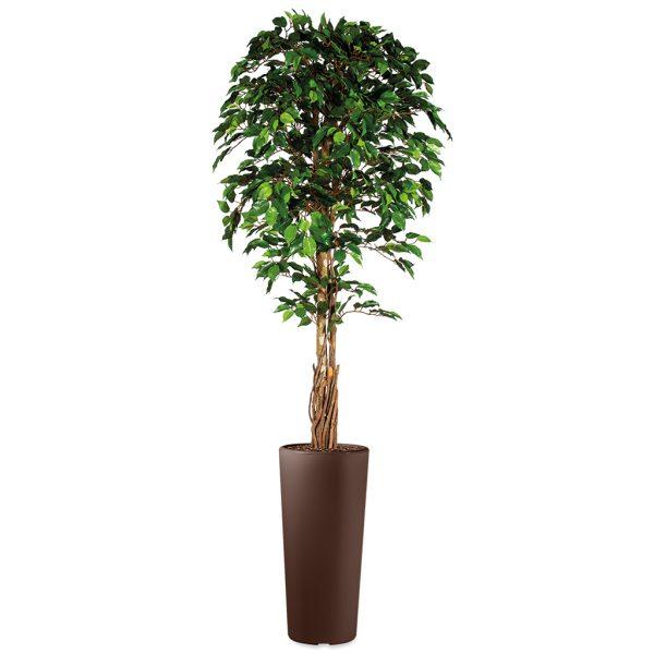 HTT - Kunstplant Ficus in Clou rond bruin H250 cm