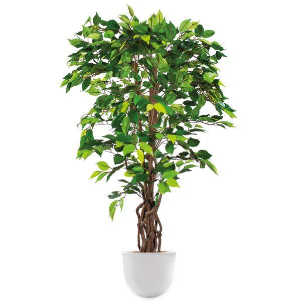 HTT - Kunstplant Ficus in Eggy wit H140 cm - kunstplantshop.nl