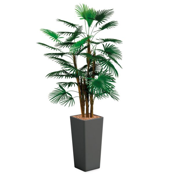 HTT - Kunstplant Rhapis palm in Clou vierkant antraciet H185 cm - kunstplantshop.nl