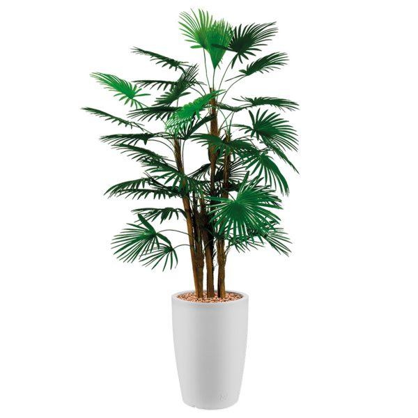 HTT - Kunstplant Rhapis palm in Genesis rond wit H150 cm - kunstplantshop.nl