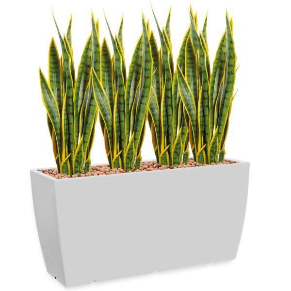 HTT - Kunstplant Sansevieria in Genesis cassetta wit H110 cm - kunstplantshop.nl