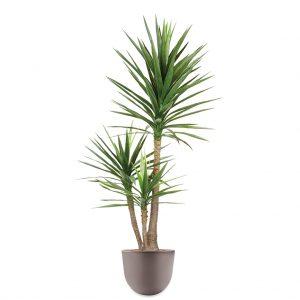 HTT - Kunstplant Yucca in Eggy taupe H175 cm - kunstplantshop.nl