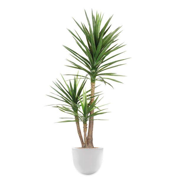 HTT - Kunstplant Yucca in Eggy wit H175 cm - kunstplantshop.nl
