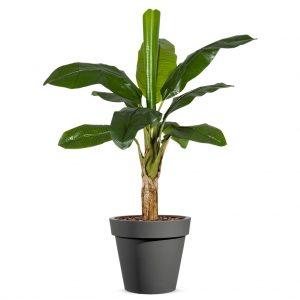 Kunstplant Bananenplant in Easy antraciet H140cm - HTT Decorations