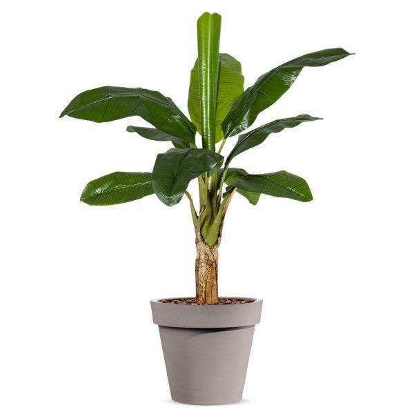 Kunstplant Bananenplant in Easy taupe H140cm - HTT Decorations